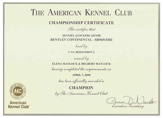 Bentley's AKC champion certificate